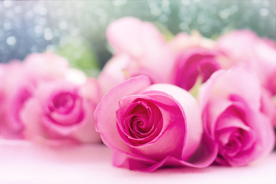 pink-roses-2191632_960_720